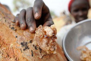Gomme arabique Sahel