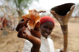 Gomme arabique Tchad
