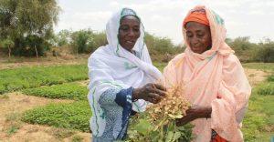 Plantes du Sahel