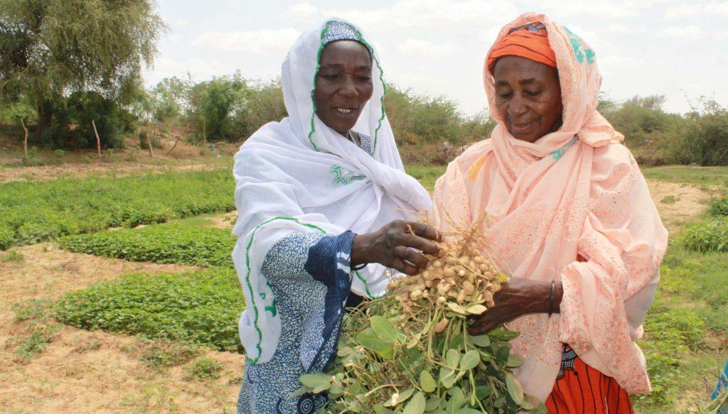 Les plantes résistantes au climat - Niger