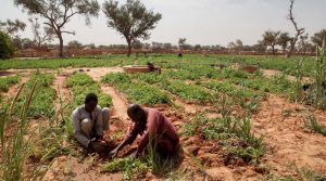 Initiative Verte Alliance Sahel