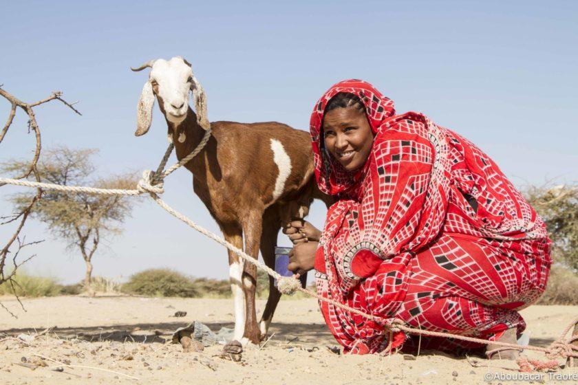 Elevage caprin Djibouti